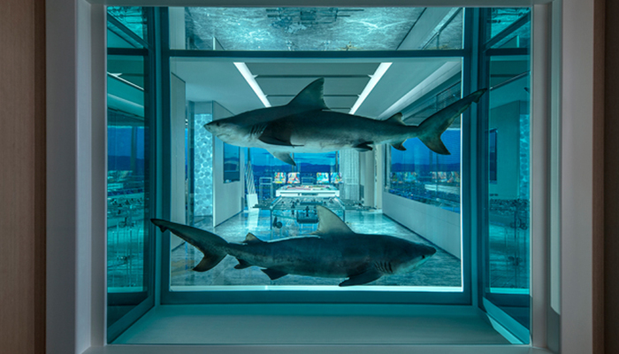 Haaien op sterk water