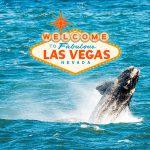Walvissen in Las Vegas