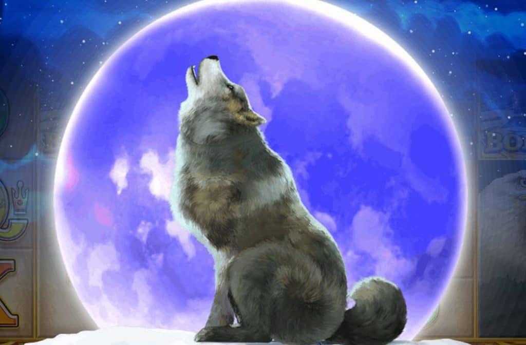 De huilende wolf kondigt een prijs aan