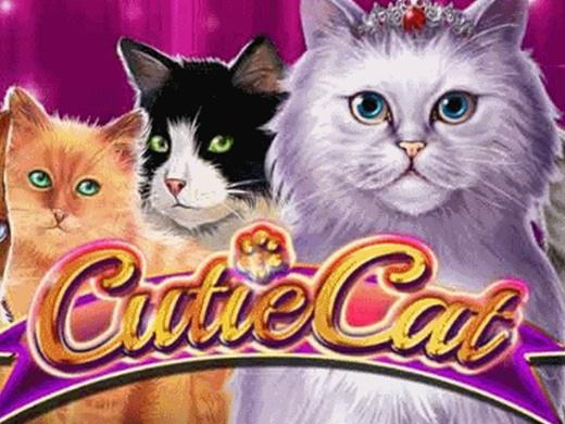 Cutie Cat Gamomat