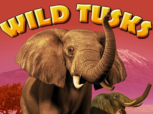 Wild Tusks High 5 Games1