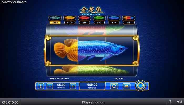 Arowanas Luck Gameplay