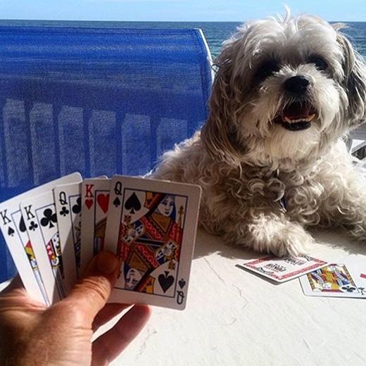 Pokerface lezen