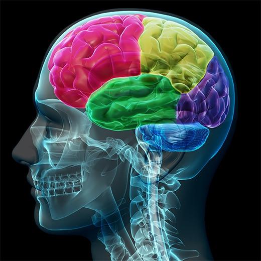 Hersenen gokken